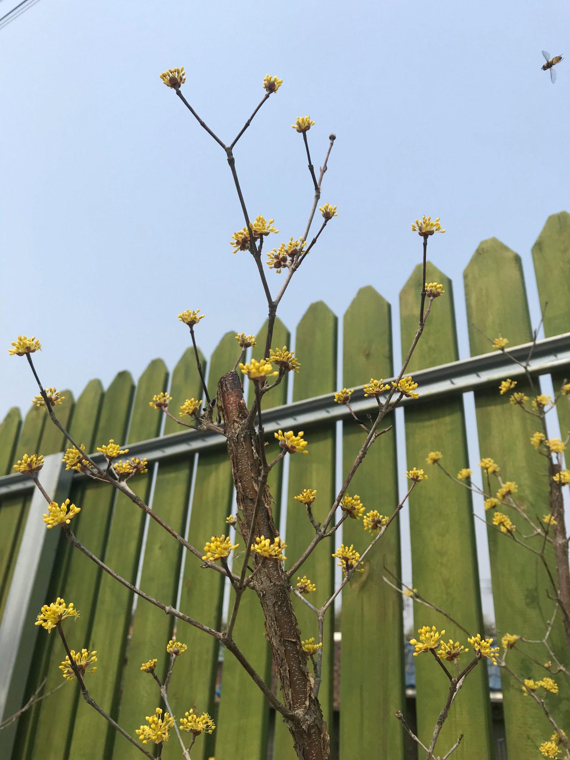 Wood fencing Huntsville, aL